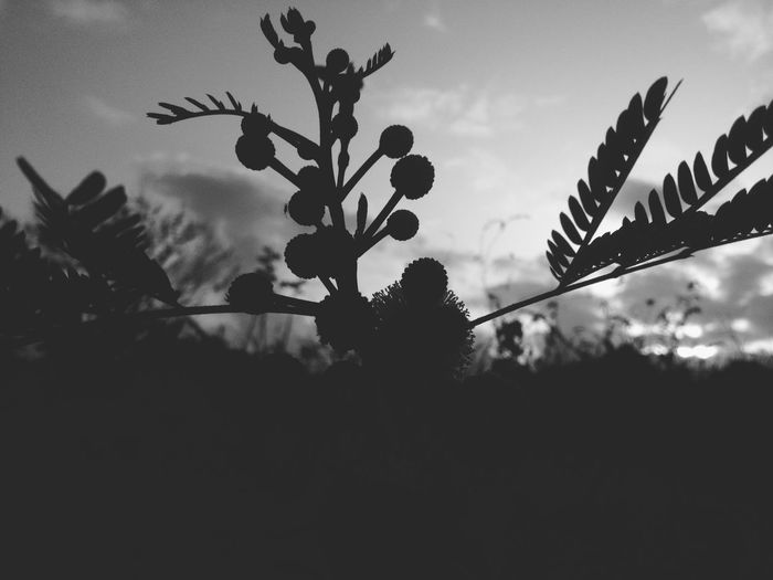 EyeEm Nature Lover Shillouette Shadow Black & White Black And White Blackandwhite Flowerporn Nature Photography Flowers Flower