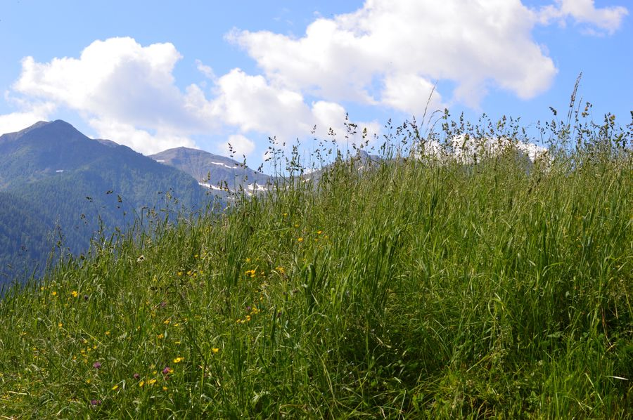 Italien Italia Italy Alto Adige South Tyrol Südtirol Ultental Sky Plant Beauty In Nature Growth Cloud - Sky Nature No People Tranquil Scene Land Green Color Tranquility