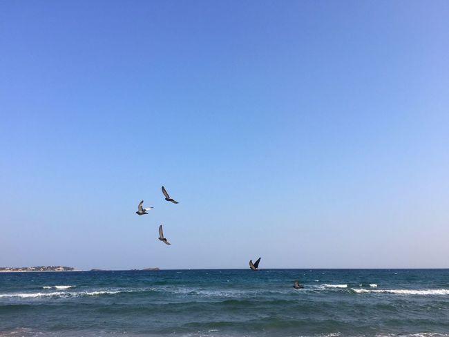 Bord De Mer Côte D'Azur Mer Mediterranée Méditerranée Sea Blue Bird Flying Nature Water Beauty In Nature Mer CIELFIE Skyfie Sky Tranquility Beach