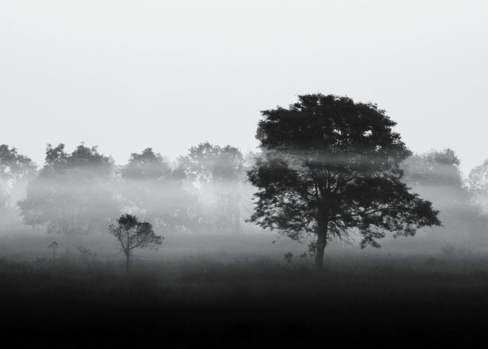 Scenic view of forest in foggy weather