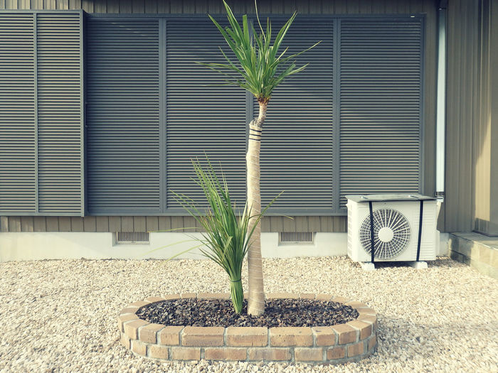 Potted plant outside building