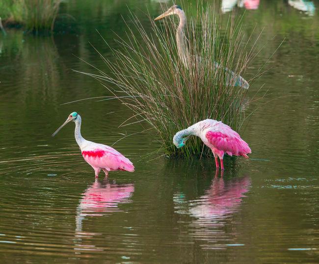 Birds on a lake