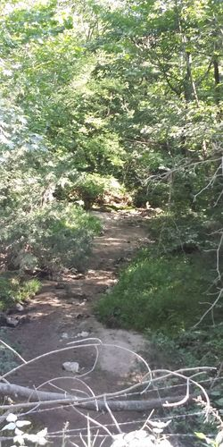Path Tree Green