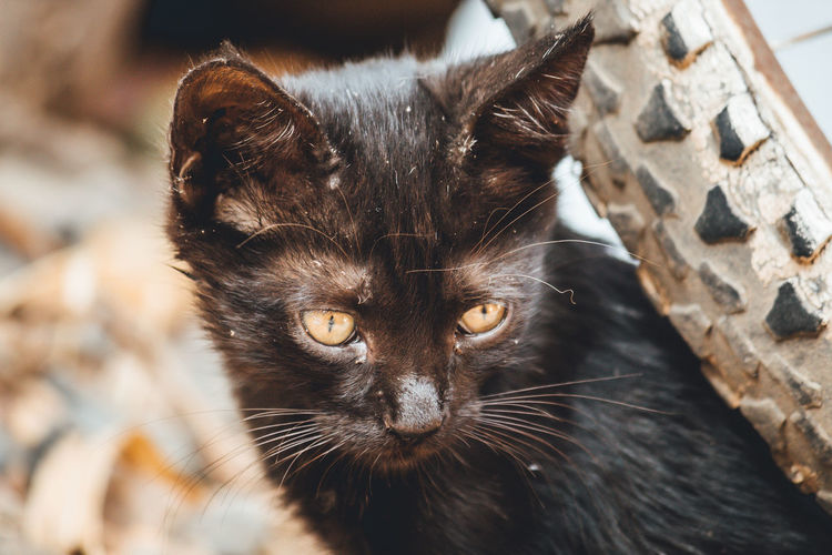 Black cat looking down outdoors