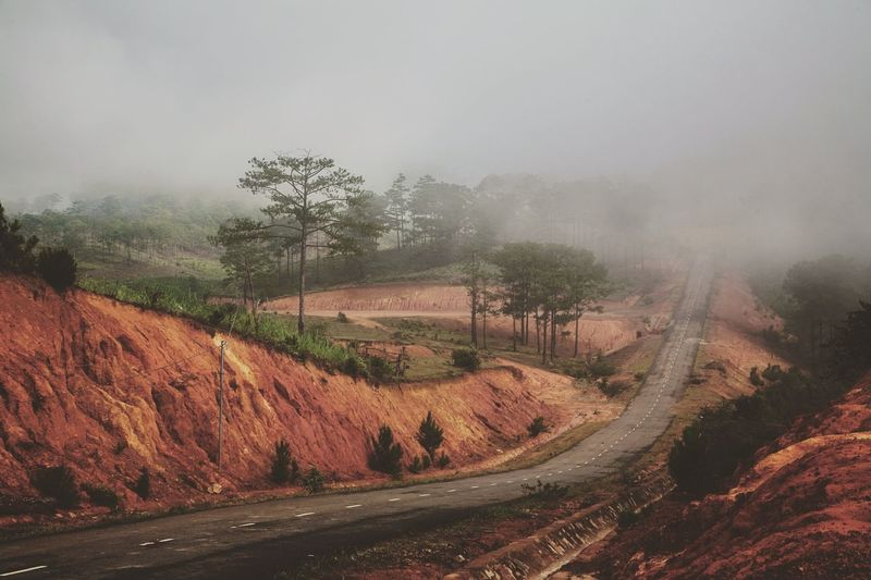 Diminishing View Of Country Road Along Trees In Foggy Weather