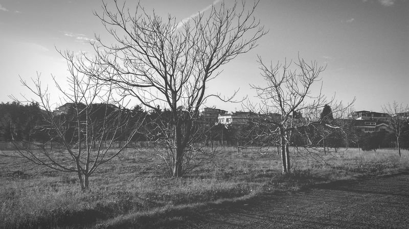 EyeEm Nature Lover From My Point Of View Landscape Forest Blackandwhite