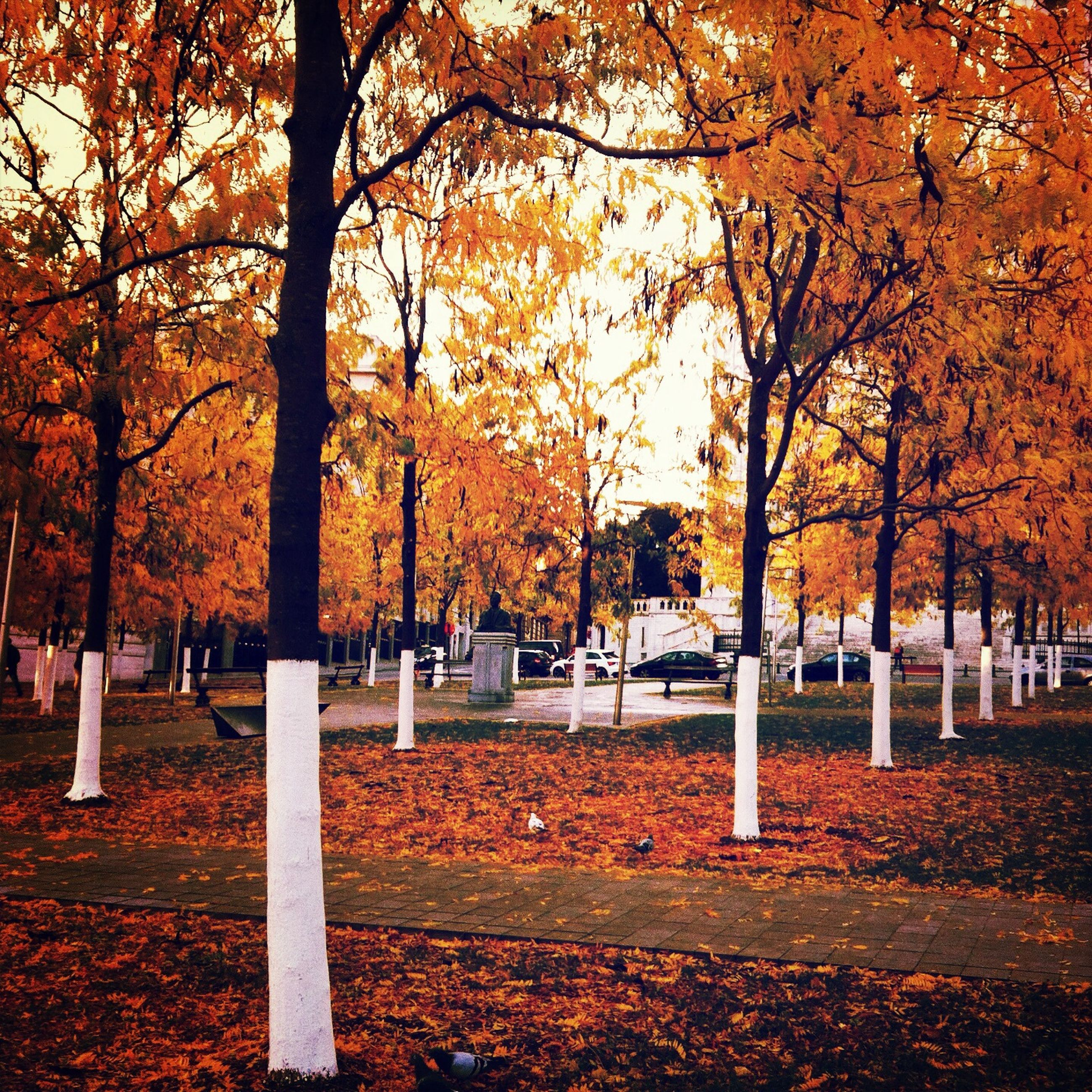 autumn, tree, change, season, orange color, park - man made space, leaf, yellow, growth, nature, park, branch, fallen, beauty in nature, tree trunk, tranquility, outdoors, day, incidental people, fall