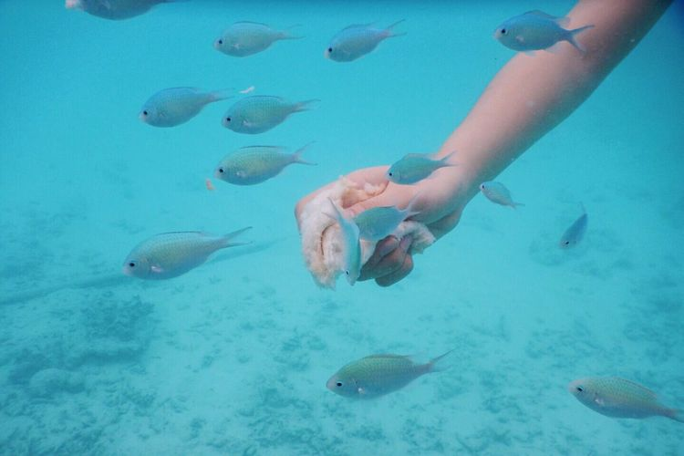Close-up hand feeding fishes swimming in sea
