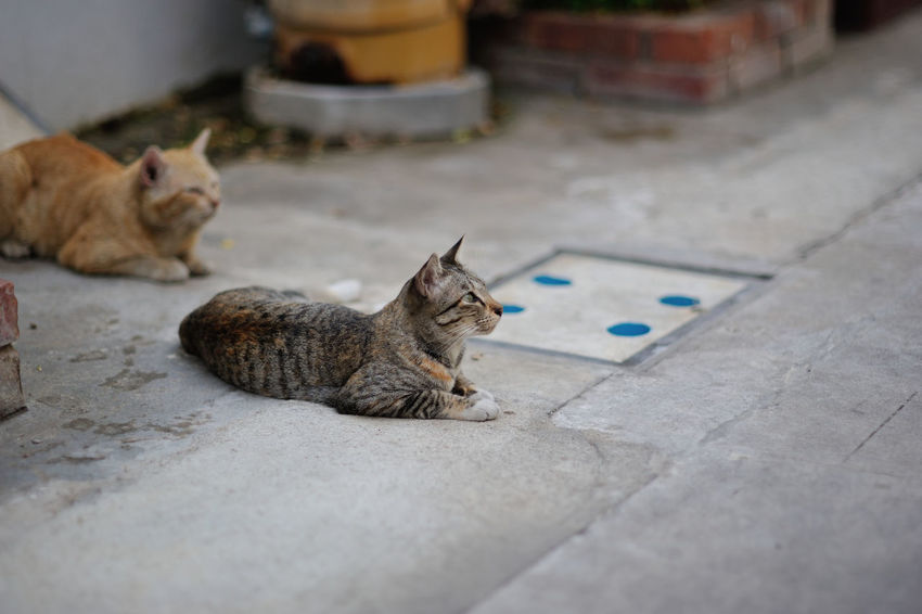 Animal Themes Cat Domestic Animals Domestic Cat Feline Lying Down No People Outdoors Pets Sitting