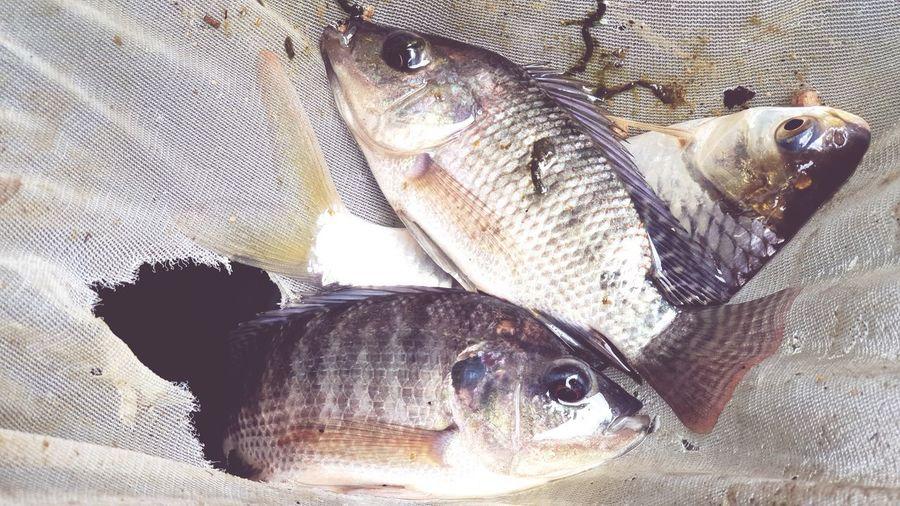 UnderSea Pets Fish Close-up