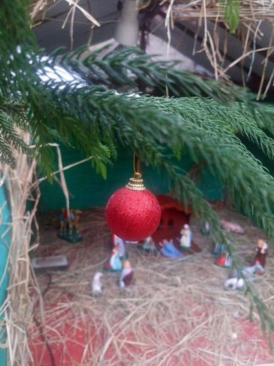 Branch Celebration Christmas Christmas Collection Christmas Decoration Christmas Lights Christmas Ornament Christmas Tree Close-up Crib Green Color Hanging Holiday - Event Leaf Merry Christmas Merry Christmas Eve! Merry Christmas! Nativity Church Nativity Figurine Nativity Scene Nature No People Red Traveling Home For The Holidays Tree