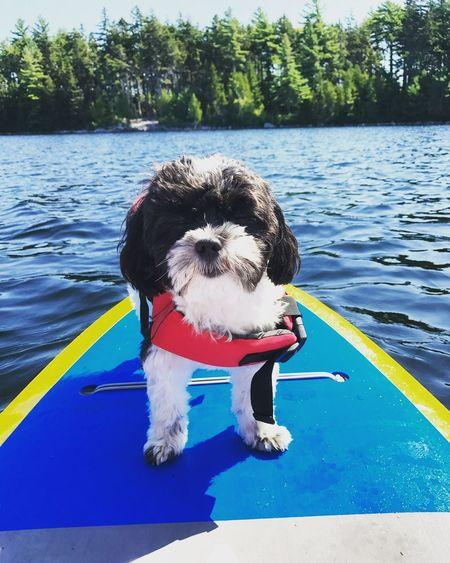 Rocking my new life jacket to go paddle boarding 🏄🏻♀️🐼🏄🏻♀️