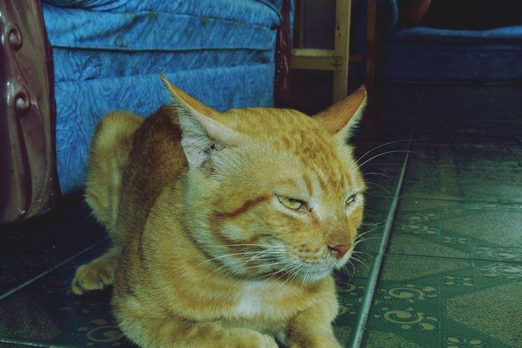 Kucing Cat Pulau Pari