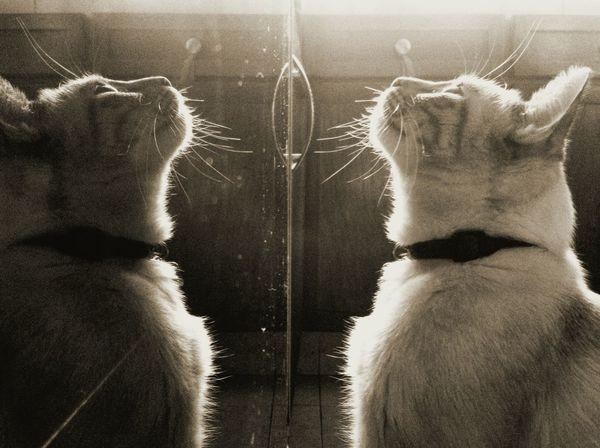 Taking Photos Animals Sepia Reflection Cat Cute Pets Beautiful ♥