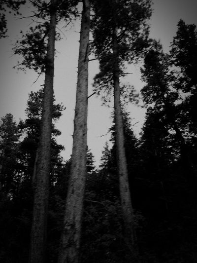 Eerie Dark Macabre Silouette & Sky Eery Woods Grunge Black And White Haunted Shadowy Landscape Outdoors Silhouette Remote Mysterious Halloween Grungy Textures High Contrast Forest Low Angle View Scenics Lookout Mountain