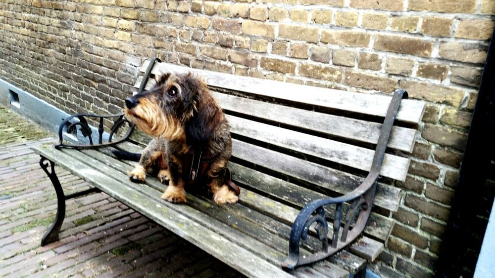Summer Dogs Hanging Out Relaxing SamsungS5 Visit Holland Dog Daschund Teckel Dackel Goedereede