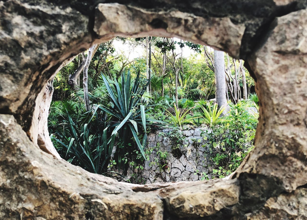 plant, tree, growth, nature, day, no people, outdoors, tree trunk, solid, trunk, focus on foreground, textured, hole, close-up, rock, green color, beauty in nature, architecture, tranquility, rough