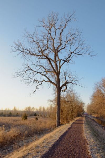 Along The Canal Path Bare Tree Beauty In Nature Canal Path Canal Walks Clear Sky Day Landscape Nature No People Outdoors Scenics The Way Forward Tranquility Tree