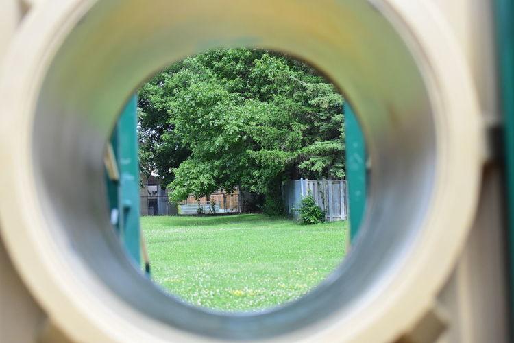 Trees seen through arch window