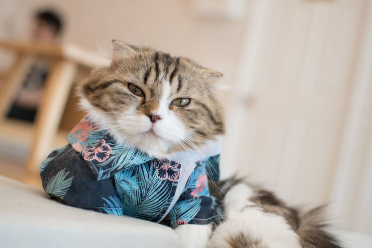 Mammal Animal Cat Animal Themes Domestic Pets Domestic Cat Feline Domestic Animals One Animal Indoors  Relaxation Young Animal Selective Focus No People Sitting Kitten Focus On Foreground Lying Down Portrait Whisker Animal Head  Tabby