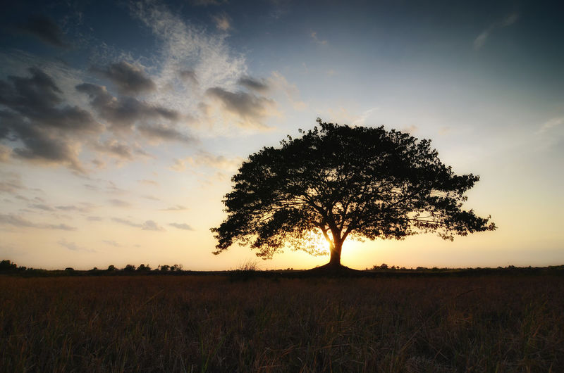 tree in field sunset backgroundform Thailand Sky Sunset Plant Field Land Tranquility Beauty In Nature Tree Environment Scenics - Nature Tranquil Scene Cloud - Sky Landscape Nature Growth Grass Non-urban Scene Outdoors Silhouette No People