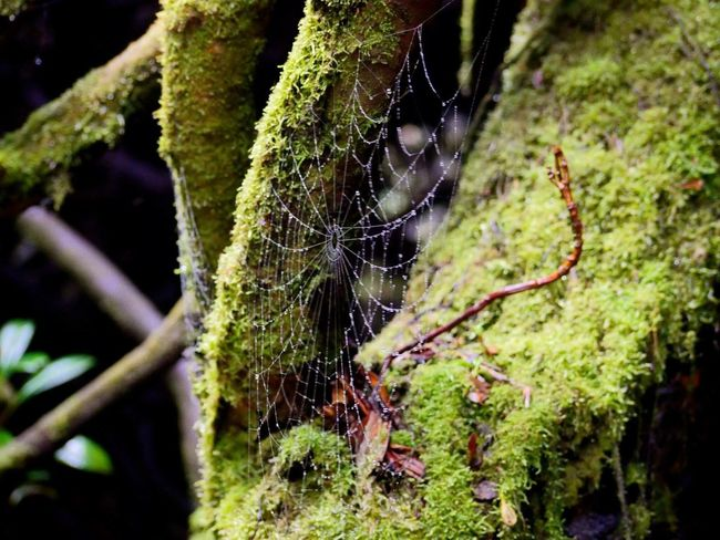 Spider Web Nature Outdoors rain forrest Costa Rica