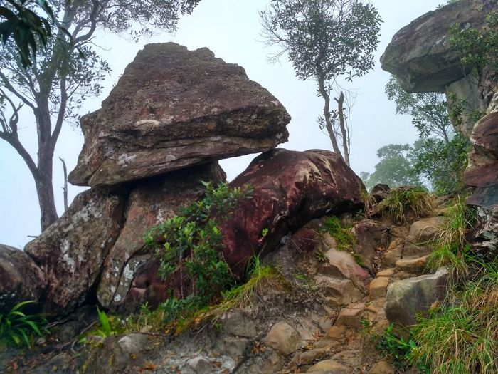 Stone Wildlife No People Outdoors Forest Nature Mountain Beauty In Nature Landscape StonesTree Nature TabKak Hang Nak Nature Trail Thailand Fog Fog_collection Foggy Mountains Krabi Thailand Miles Away