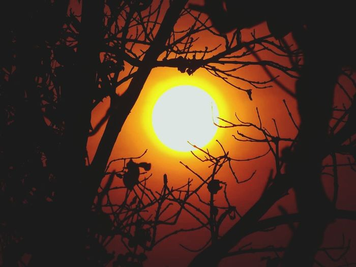Sunset Silhouette Branch Tree Beauty In Nature Sun Orange Color Scenics Nature Majestic Outdoors Sky Glowing Tranquil Scene Nature Scenery Shots Sunset_collection EyeEm Best Shots EyeEm Nature Lover EyeEm Gallery EyeEm Best Shots - Nature Eyeemphotography Eye Em Nature Lover EyeEm Team Nature Photography Welcome To Black