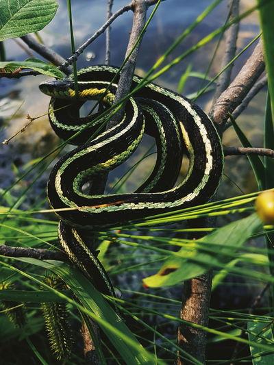 snake. Snake