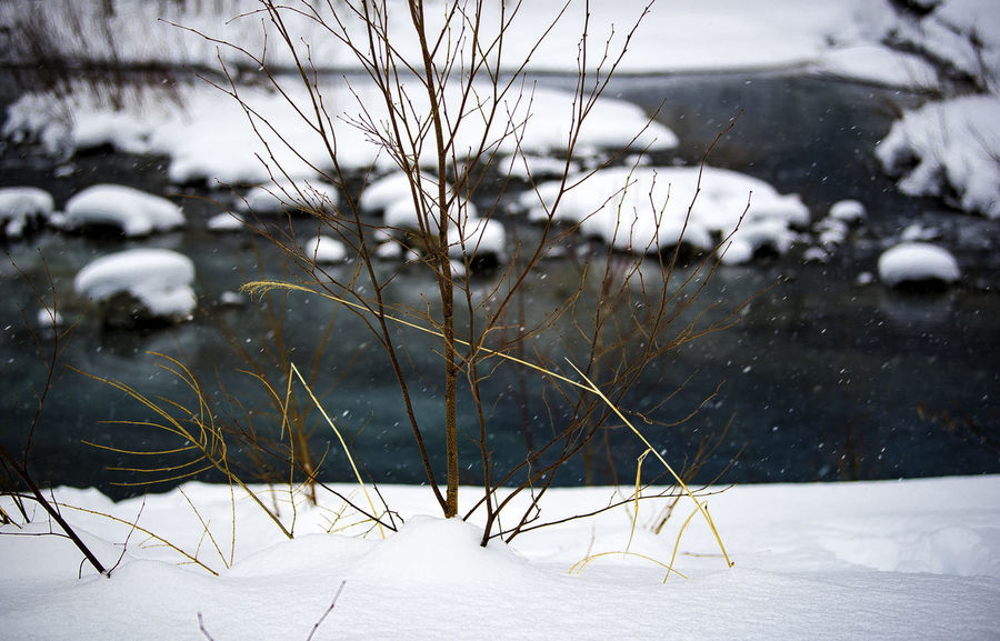 Aoi Ike. Litterally translated as Blue Pond. Hokkaido. Japan Aoi Ike Hokkaido Japan Beauty In Nature Blue Pond Close-up Cold Cold Temperature Focus On Foreground Frozen Landscape Nature No People Outdoors Scenics Snow Tranquility Weather Winter Shades Of Winter