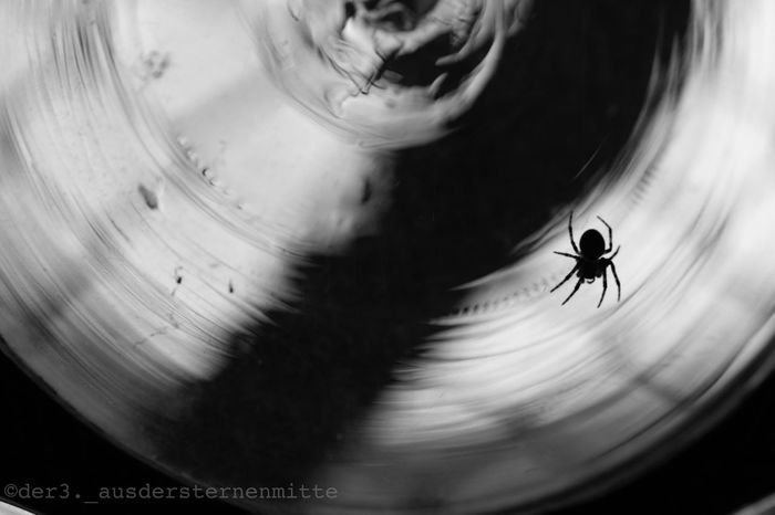 Hiding inside a church Spider Macro Nature Macro Nature Macro Photography Macro_collection Somesortofbeauty Detail Watchoutfordetails Nature Photography Natureshots Nofilter Glass Window Blackandwhite Black & White Blackandwhite Photography