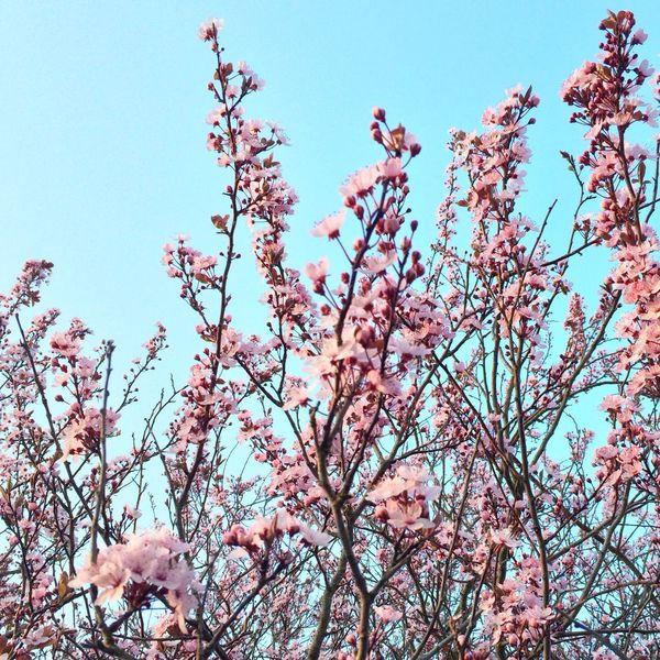 EyeEm Best Shots AMPt_community EyeEm Nature Lover Bloom