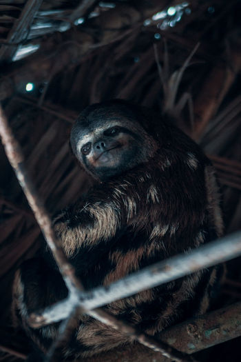 Low angle portrait of sloth on roof