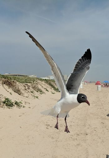 Seagull flying over the beach
