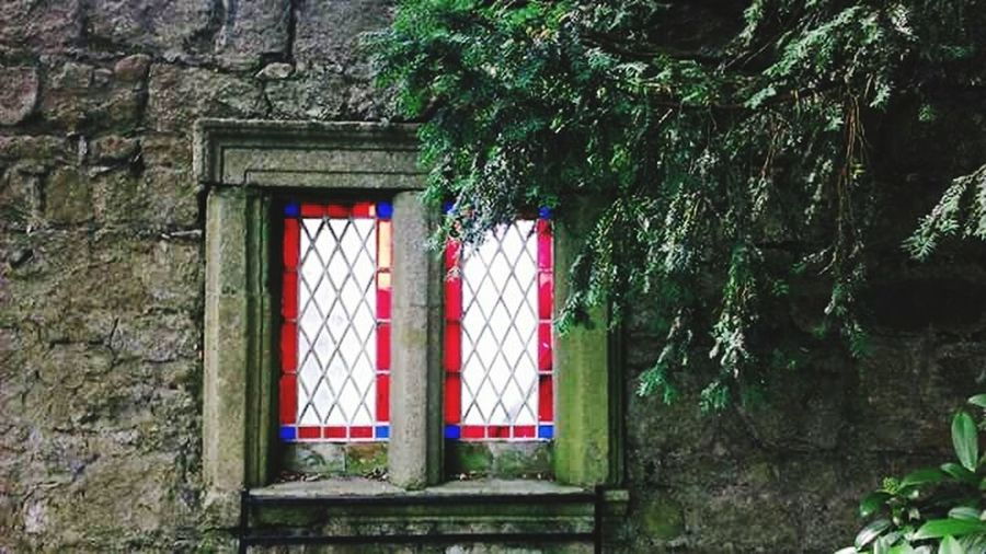 Architecture Window Garden Tree Hanging Built Structure Growth Day No People Building Exterior Outdoors Ivy Nature