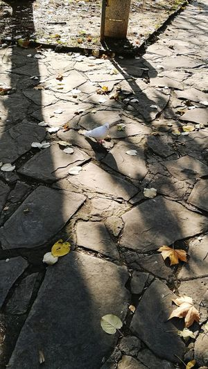 Went out to hunt food! The bird also looking for food 😝 Shadow Outdoors Day Nature Sunlight Walking No People Wildlife Goodday Bird White Bird Stone Steps Leafs On The Ground