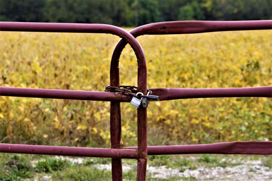 Soy Bean Field Agriculture Soy Beans Barrier Boundary Close-up Connection Day Farming Fence Field Focus On Foreground Food Land Metal Nature No People Outdoors Plant Protection Railing Red Gate Rusty Safety Security Soy Bean Fields