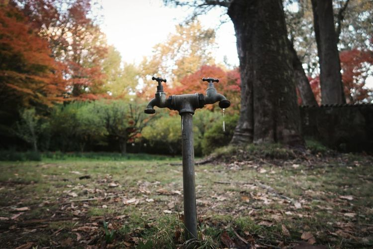 Faucets On Field During Autumn