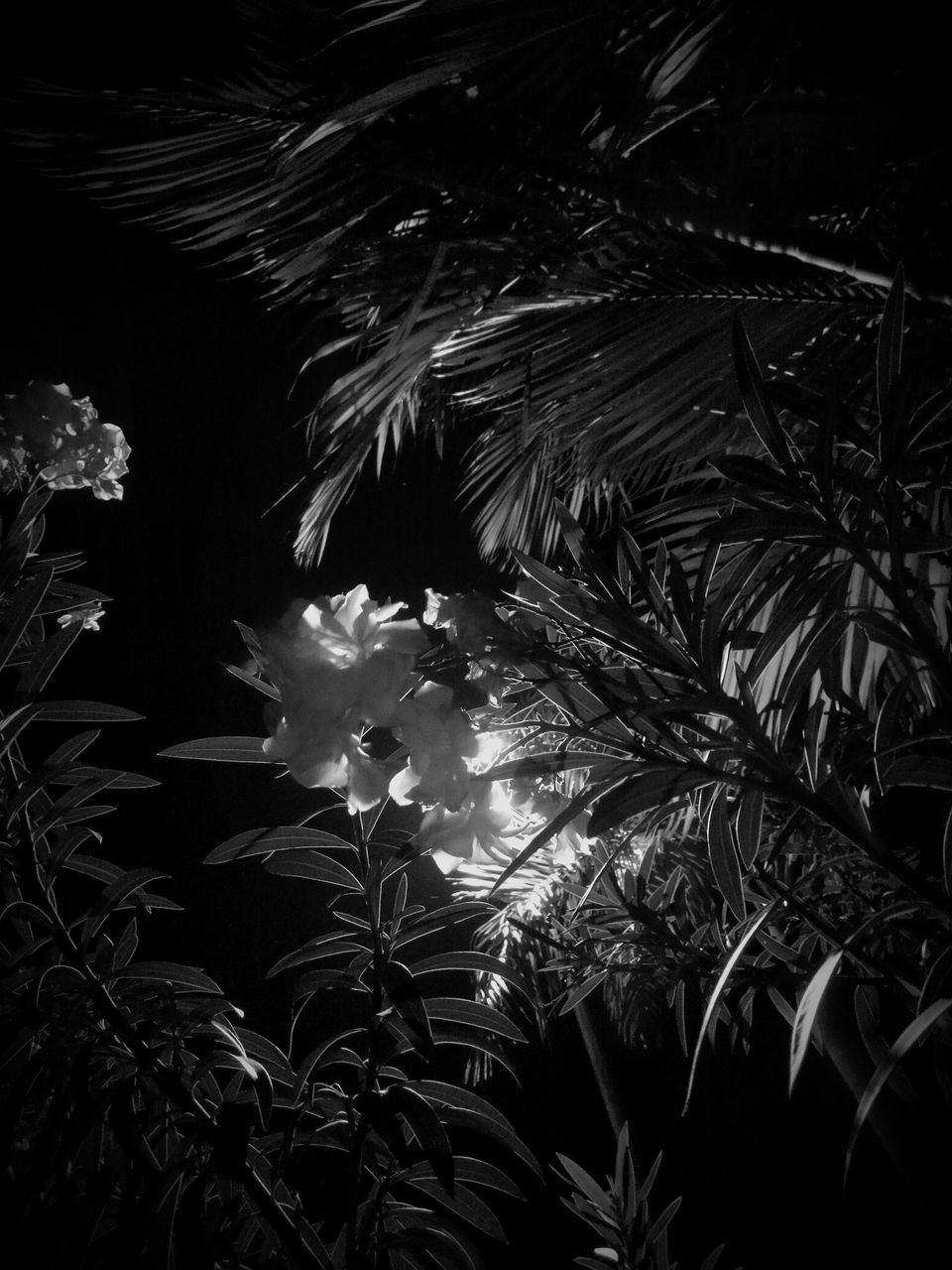 growth, night, nature, plant, tree, no people, leaf, beauty in nature, palm tree, outdoors, sky