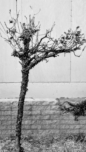 The Street Photographer - 2017 EyeEm Awards Blackandwhite Perspectives On Nature Black And White Friday EyeEm Ready   Visual Creativity Summer Exploratorium The Street Photographer - 2018 EyeEm Awards The Great Outdoors - 2018 EyeEm Awards A New Beginning 50 Ways Of Seeing: Gratitude