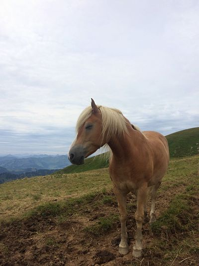 Brown horse standing against mountains