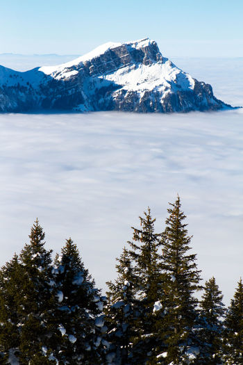 Cold Temperature Winter Tree Mountain Scenics - Nature Snow Beauty In Nature Plant Tranquil Scene Sky Tranquility Snowcapped Mountain No People Nature Day Mountain Range Non-urban Scene Water Outdoors Mountain Peak Pine Tree Coniferous Tree Horizon Over Clouds Over The Clouds
