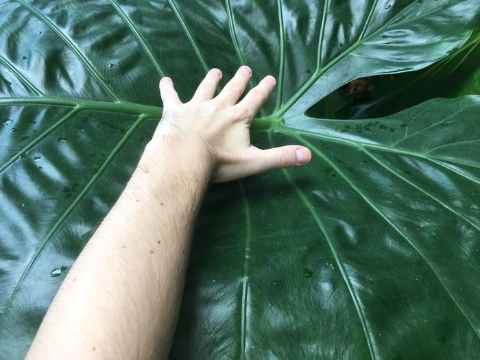 Cropped Hand Of Man Over Wet Leaf