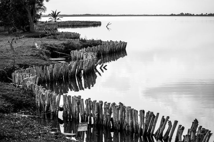 Lines in the swamp Artistic Cuba Diagonal Lines Reflection Swamp Travel Beauty In Nature Blackandwhite Cienaga De Zapata Contrast Day In A Row Lines And Shapes Lines Shapes And Curves Nature No People Outdoors Reflections In The Water Water