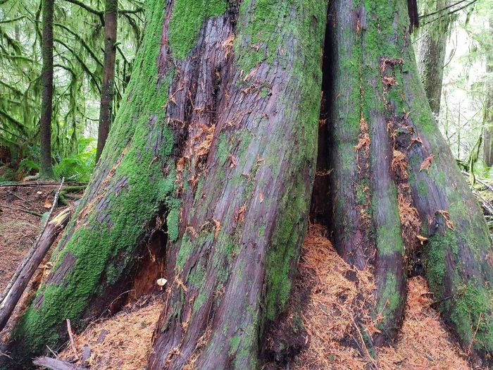 Panoramic view of tree trunk in forest