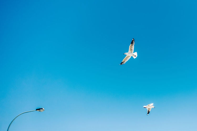 Mid-air Flying Sky Blue Clear Sky Copy Space Motion Vertebrate Nature Day Real People Bird Full Length Jumping Animal Themes Spread Wings Animals In The Wild Leisure Activity Animal Wildlife Lifestyles Outdoors Human Arm Seagull Outdoor Travel