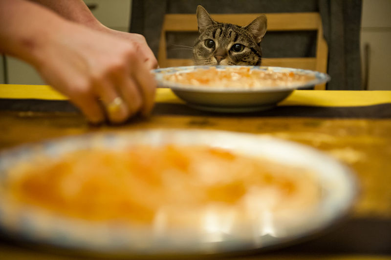 Cropped hands by soup in plates against cat at home
