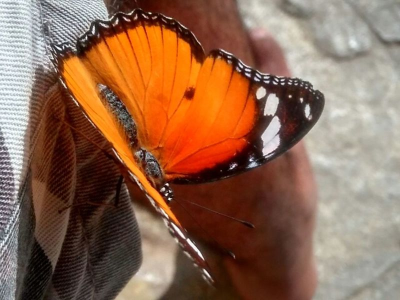 Butterfly Black And Orange (: Outdoors No People Photo First Time I Took Closeup Of Butterfly
