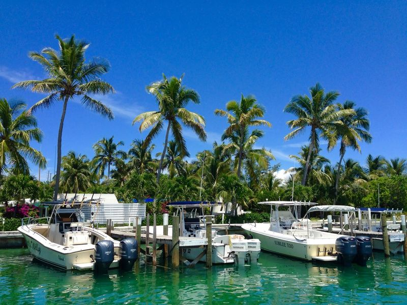 Tropcal Blue Caribbean Life Island Scene Travel Destinations Marina Tree Water Nautical Vessel Palm Tree Plant Sky Tropical Climate Mode Of Transportation Transportation Moored Nature Blue Waterfront No People Day Clear Sky Travel Travel Destinations Harbor Outdoors