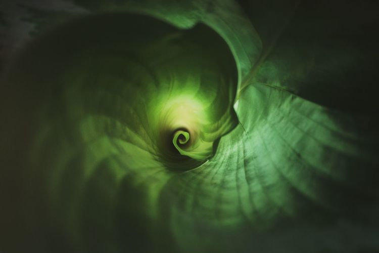 This is where it start. Folded, deep inside those warmth inside, protected, safe. By the rhythm of the green filtered light, always fed. But always tempted by that irresistible outside, pulled by it. Until the day come, where the constrain's a bit released, Fibonacci's being a bit distracted, and it grow, unwinding, slowly, as the day goes by, inch after inch, deploying its graceful greenness. Like arms opening wide to embrace the coming light, and take it all. But until, it just peacefully sleep, by the lullaby of the outside traffic. . I wonder what's the color of a breeze. If it change from a sunny day to a fresh night, after a storm of before the dew. Nature Leaf Spiral Fibonacci Naturelovers